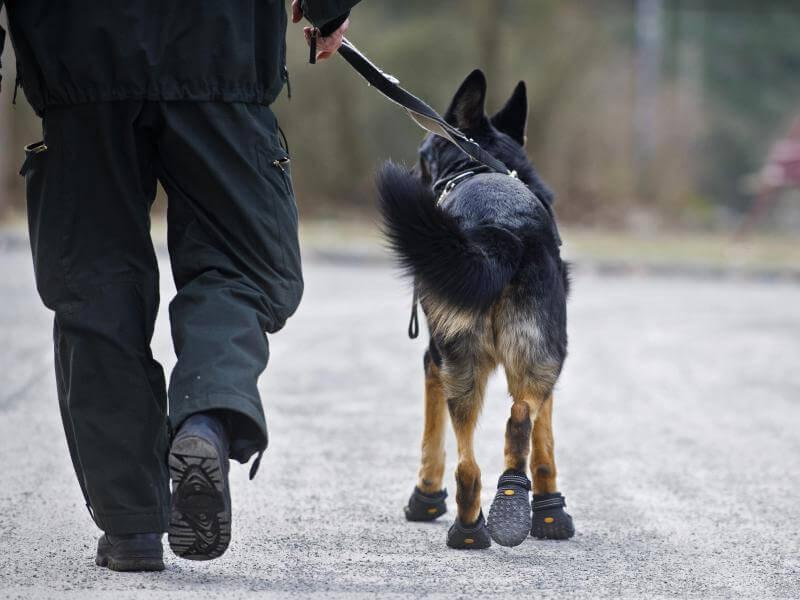 О чем нужно знать, отправляясь на прогулку с собакой?