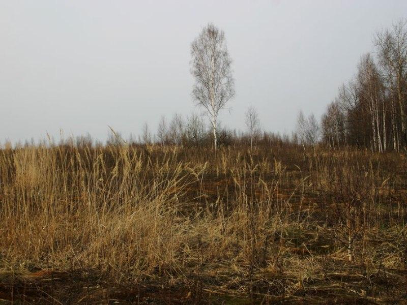 Имеет ли право ветеран боевых действий на земельный участок под строительство?